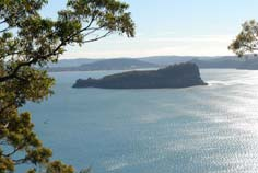 lion island northern beaches
