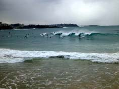 surfers on a northern beaches tour