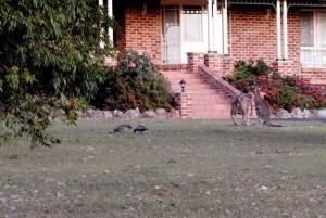 urban kangaroo 7