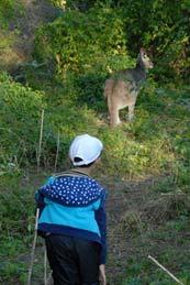 canguro visto